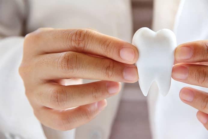 Zahnarzt mit Zahnmodell in der Hand